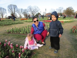 We picnicked near the tulip garden